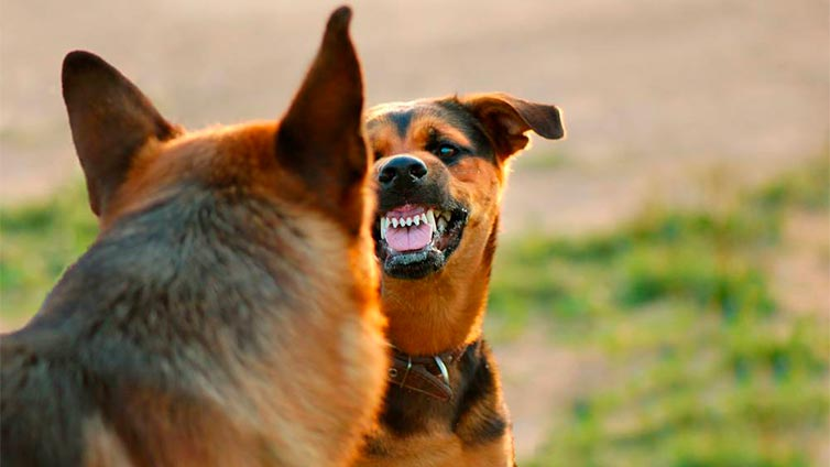 Aggression towards your other dogs