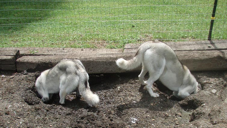 Mesh To Stop Dogs Digging