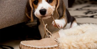 How To Stop A Dog From Chewing: The Definite Guide