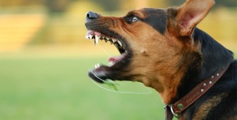 Dog Aggression – Signs, Causes and Trainings