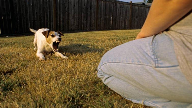 Dog Aggressive Towards Strangers At Home