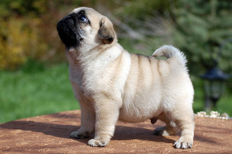 What Is The Youngest Age A Dog Can Have Puppies