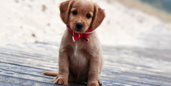 20 Cutest Puppies That Will Melt Your Heart