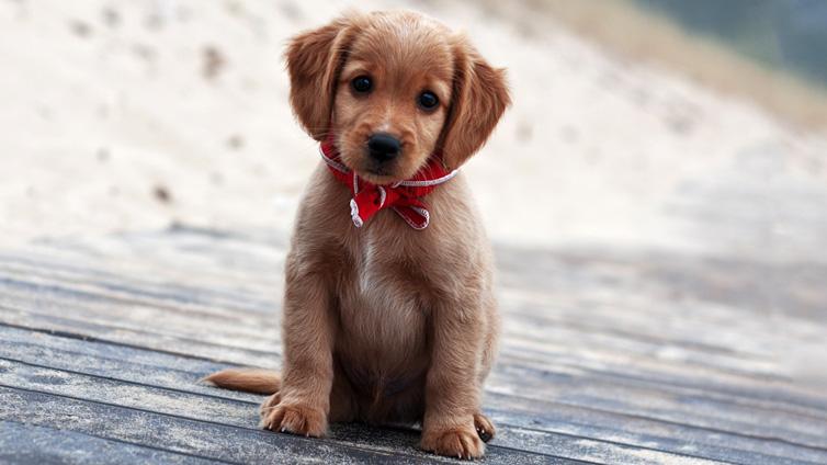 cutest puppy breeds