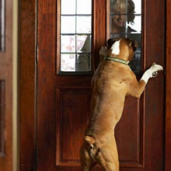 dog-jumping-on-door