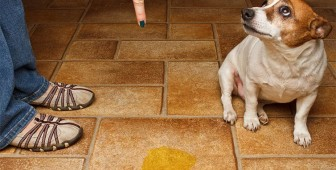 Puppy Potty Training – The Ultimate Guide