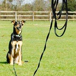 recall-long-leash