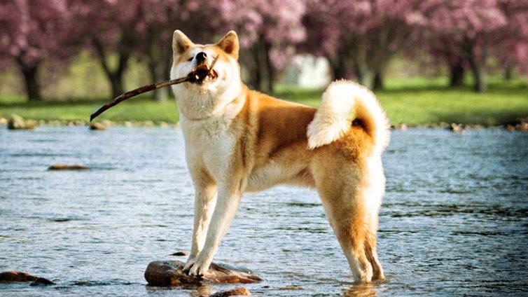 9 Dogs That Look Like Huskies Barking Royalty
