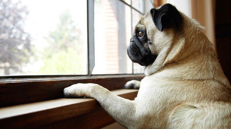 dog-alone-at-home