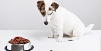 dog-wont-eat