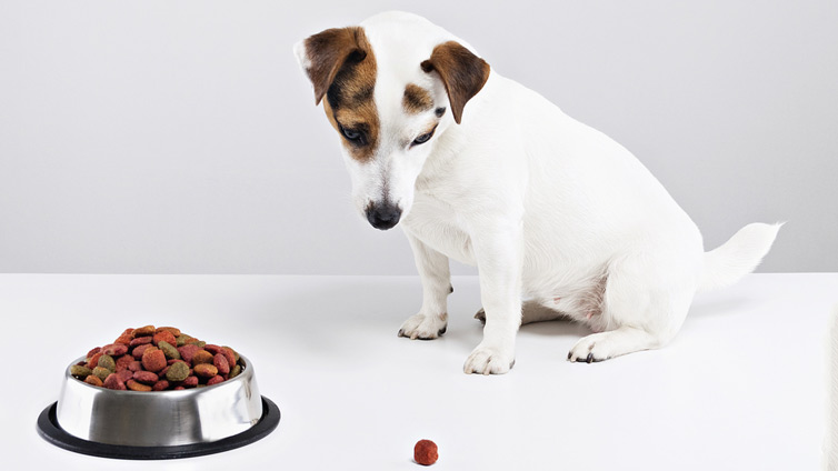 10 Reasons Why Your Dog Won't Eat - Barking Royalty