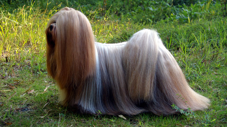 15 Dog Breeds That Can Be Left Alone Barking Royalty