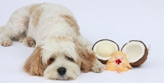 Coconut Oil for Dogs – Health Benefits and Usage