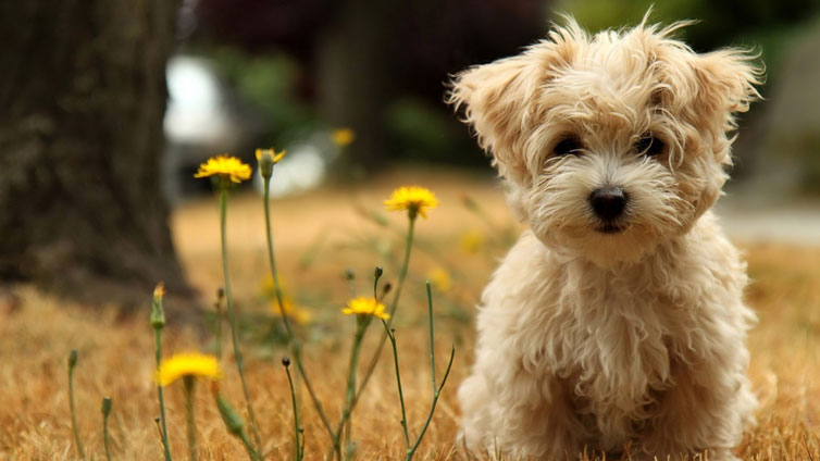 15 Dog Breeds That Don T Smell Barking Royalty