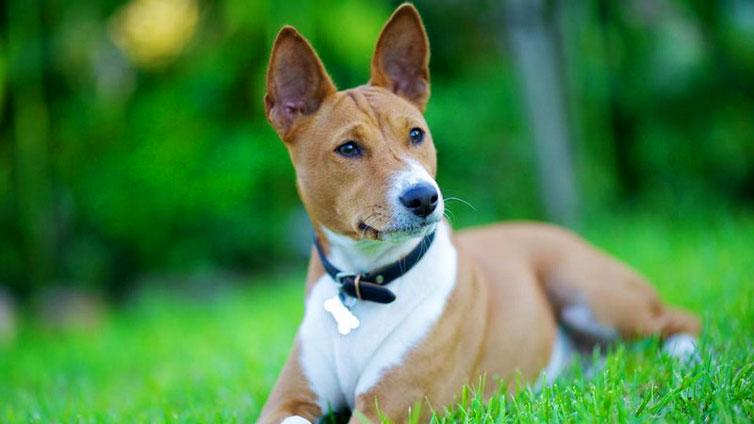 Best Dog Breeds For Indoor Pets