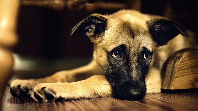 Topic des absences - Page 2 Can-Dogs-Cry-Tears