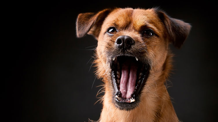 What To Do For Dog Barking No Reason