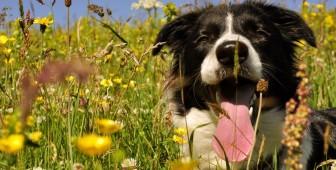 dog breathing fast