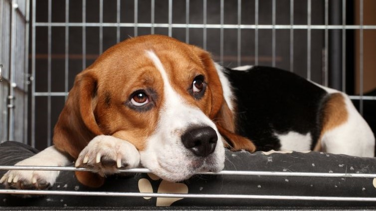 Dog Crying In Crate: How To Stop It?