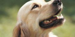 dog teeth chattering