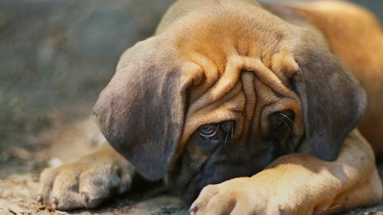 my puppy stinks