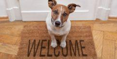 adopting adult dog