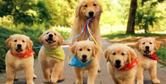 What Is The Best Age To Breed A Female Dog?