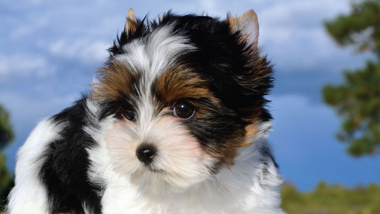 30 Small Hypoallergenic Dogs That Don't Shed