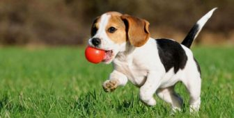 Dog Training Supplies, Equipment And Products