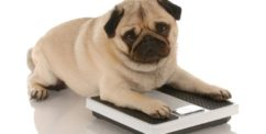 neutered dog weight gain
