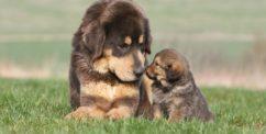 puppy or older dog adoption