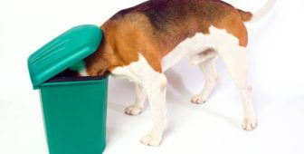 How To Stop Your Dog From Raiding The Bin