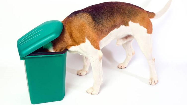 dog raiding bin