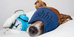 dog waking up early