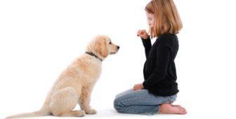 When Should You Start Dog Training?