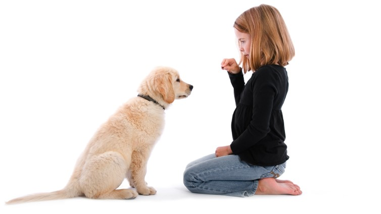 when to start dog training