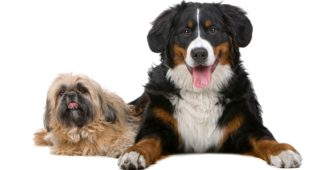 Big Or Small Dog – Which Is The Right Fit For Me?