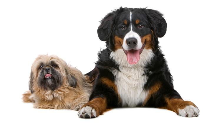 big or small dog