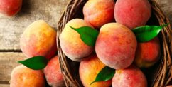 can dogs eat peaches nectarines