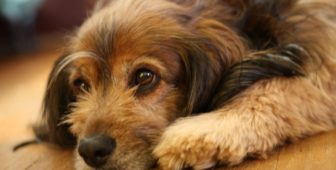 Dog Pawing: Why Dogs Paw And How To Stop It