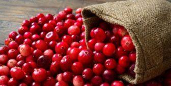 can dogs eat cranberries raspberries blueberries blackberries