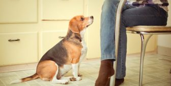 How Do I Stop My Dog From Begging For Food?