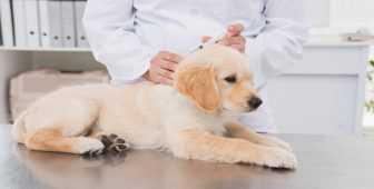 rabies vaccine dogs