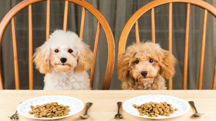Puppies wait for food