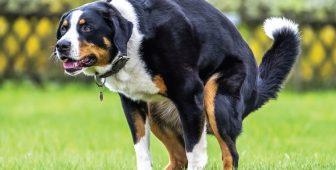 Dog Constipation – Causes, Symptoms, Treatment