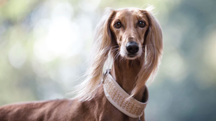 what is the best age to breed a female dog