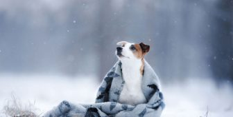 How Cold Is Too Cold For Dogs?