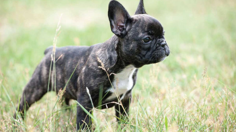 10 Best Dogs For Homes With Small Yards