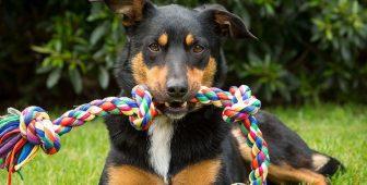Dog Adoption Checklist – Everything Your New Dog Needs