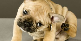 Dog Itchy Skin – Causes and Remedies